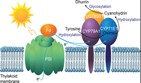 Driving metabolic pathways on with sunlight