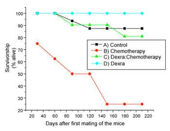 Drug protects fertility and may prolong life in chemo-treated mice