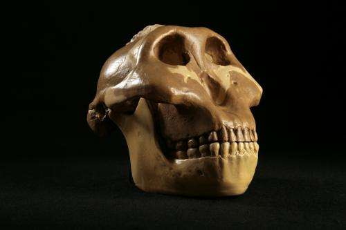 Early hominids ate just about everything