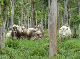 Food for thought: Use more forages in livestock farming