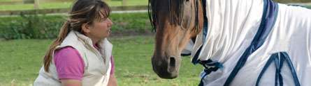 Groundbreaking research to improve diagnosis of colic in horses