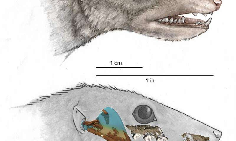 High-tech analysis of proto-mammal fossil clarifies the mammalian family tree