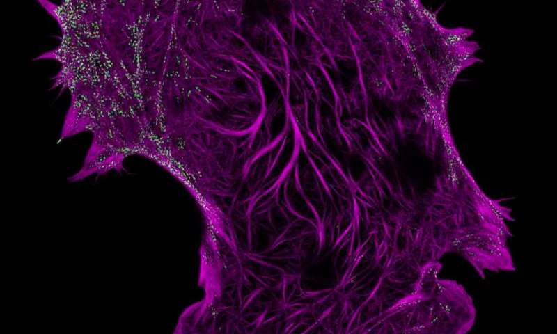 Imaging techniques set new standard for super-resolution in live cells