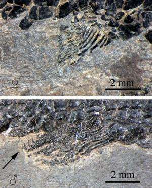 Middle Triassic fossils reveal how flying fish started to glide