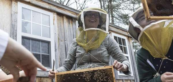 New research provides clues about honey bee decline