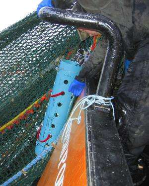 New research reveals low-oxygen impacts on West Coast groundfish