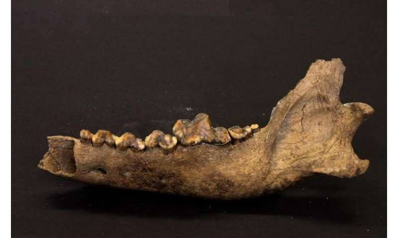 Our bond with dogs may go back more than 27,000 years