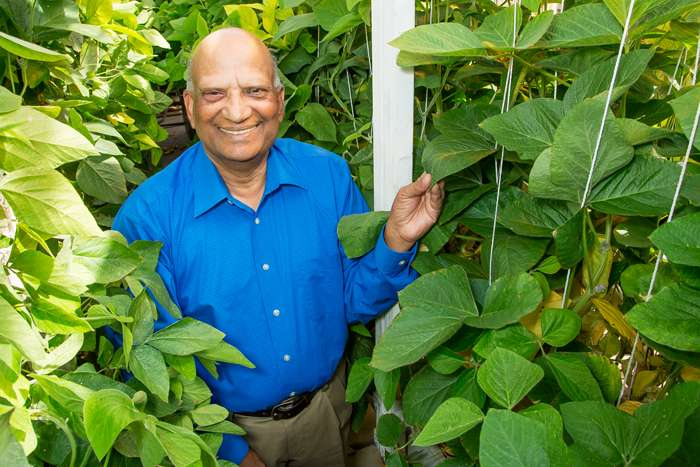 Plant breeder boosts soybean diversity, develops soybean rust-resistant plant