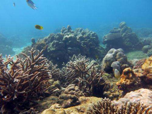 Predicting coral reef futures under climate change