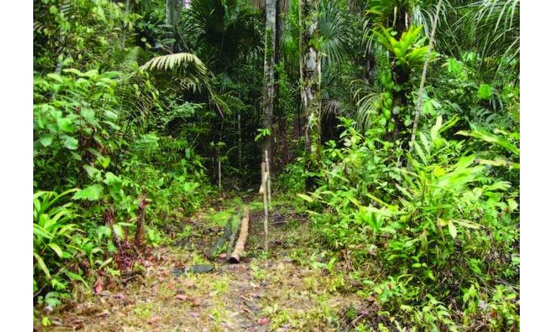Rare Amazonian butterfly named after British national treasure Sir David Attenborough