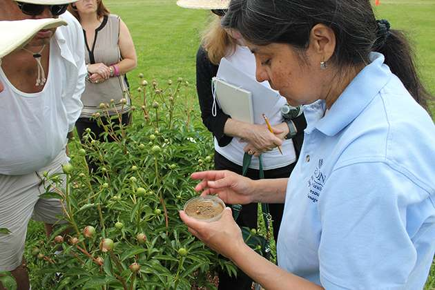 Reducing the Japanese beetle population