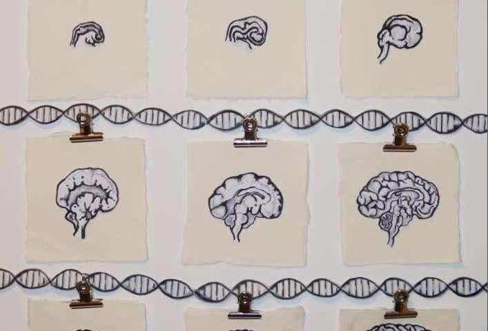 Schizophrenia-associated genetic variants affect gene regulation in the developing brain