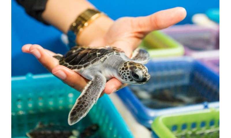 Sex and sea turtles: New FAU study reveals impact of climate change, sea level rise