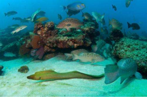 Simple index assesses reef health to guide fisheries management choices