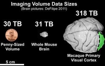 Speeding up extreme big brain data analysis