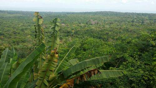 Study seeks to understand Amazonia's past to ensure its sustainable future