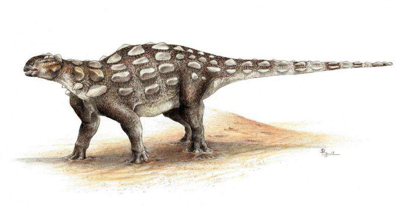 Tail as old as time -- researchers trace ankylosaur's tail evolution
