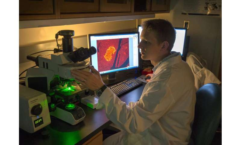 Team of diabetic researchers zeroing in on pathways that activate insulin-producing cells