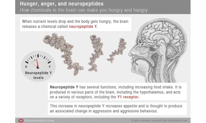 The science of 'hangry', or why some people get grumpy when they're hungry