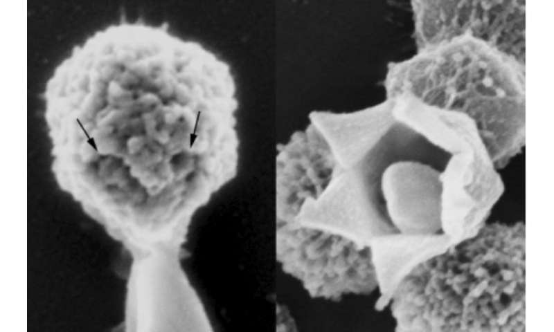 Three ways viruses have changed science for the better