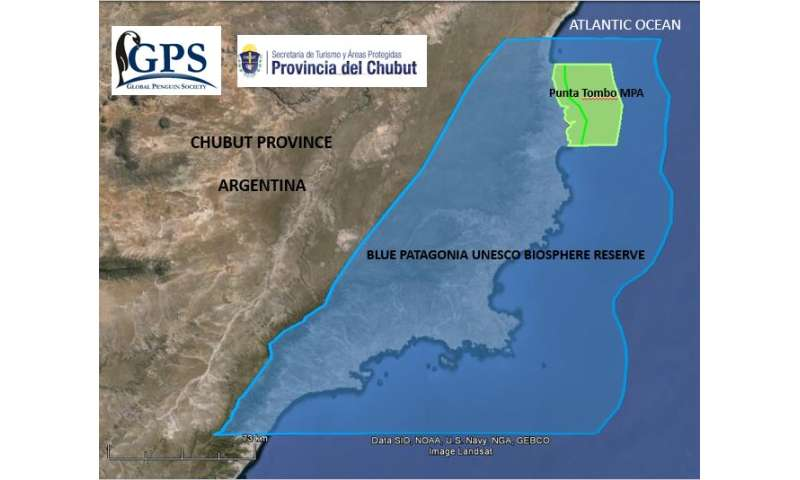UW conservationists celebrate new protected areas for Argentine penguins