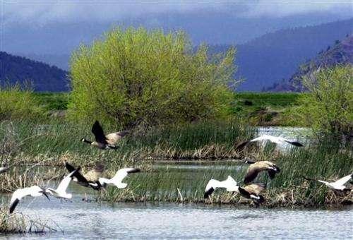 2,000 sick snow geese die in Idaho wildlife areas