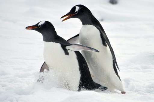 Environmentalists say the Southern Ocean is home to more than 10,000 unique species, including penguins, whales, seals and colos