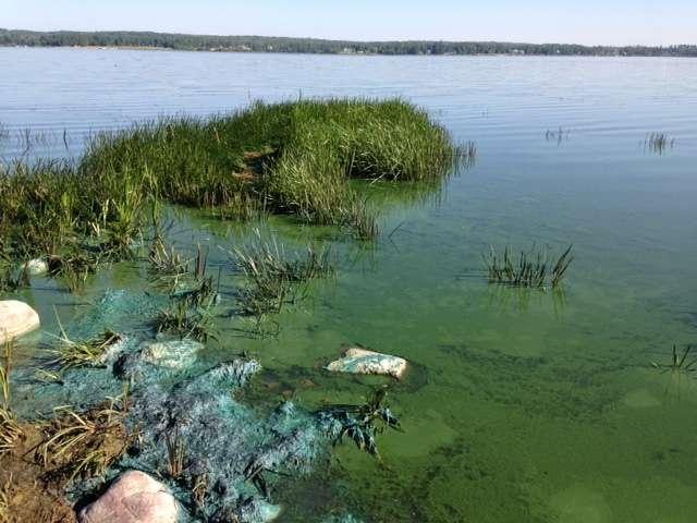 University of Alberta scientists help public avoid health risks of toxic blue-green algae