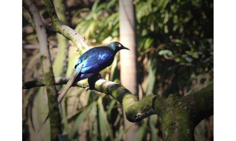 Researchers analyze the structure of bird feathers to create hues without dye