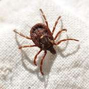 Researchers closer to ending debate around Lyme disease and ticks in Australia