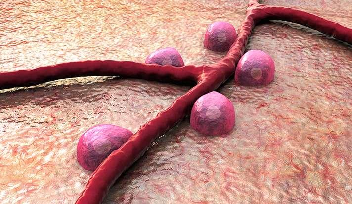 Scientists devise new platform to view metabolism