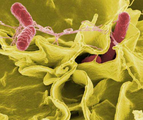 Antimicrobial CRISPR-Cas systems may be better weapons against bacteria than antibiotics