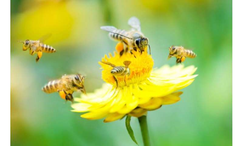 Biologist Berry Brosi on Obama's 'plan bee'