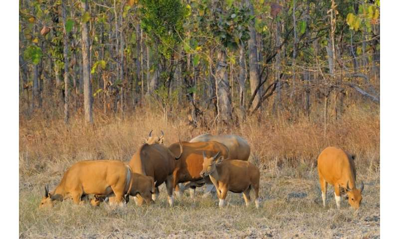 Cambodia border crossing and road threaten one of Asia's last great wilderness areas