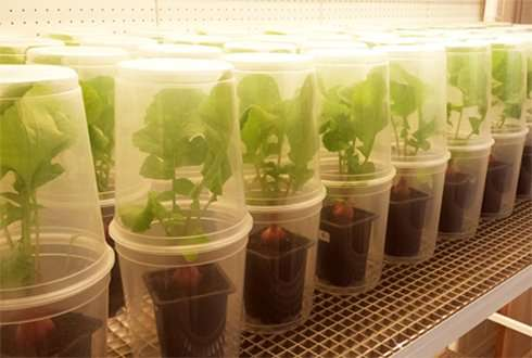 Combating pest insects in the soil with root-colonizing insecticidal fungi