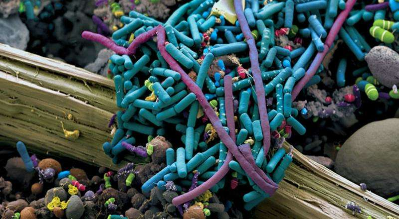 Innovative membrane capable of detecting organisms that cause diarrhea and intestinal problems