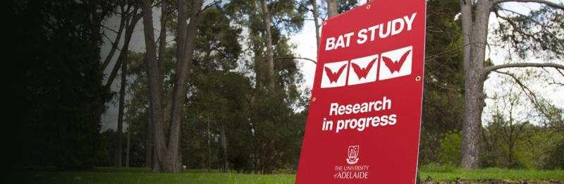 Investigating disease risk from Parklands bats