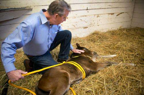Newborn foals may offer clues to autism