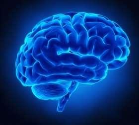 Researchers discover genetic variants that alter brain development