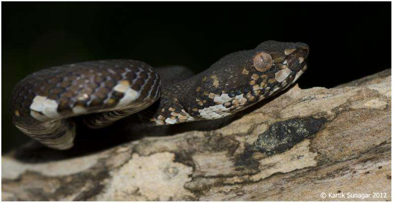 Research points to a 'two-speed' evolution of animal venom