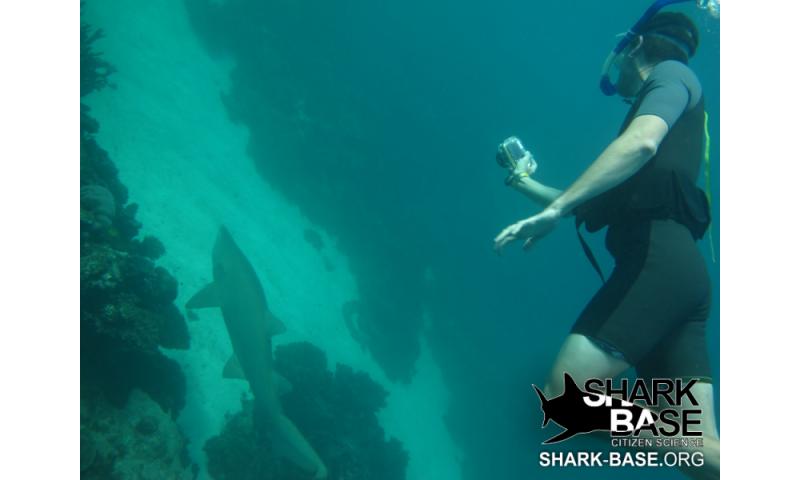 Shark researchers enlist the help of the public as citizen scientists