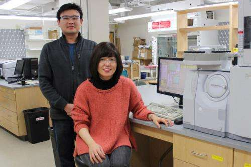 Researchers develop new approach that combines biomass conversion, solar energy conversion