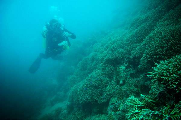 Researchers urge protection for reefs in turbid environments