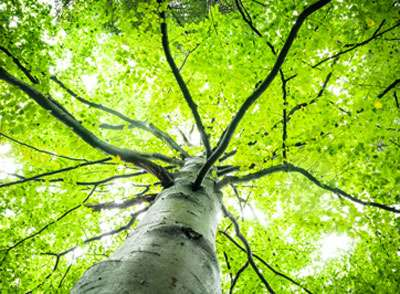 3D forest reconstruction to improve environmental monitoring