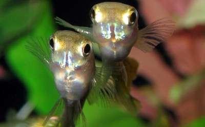 Agricultural contaminant impacts fish reproductive behaviour