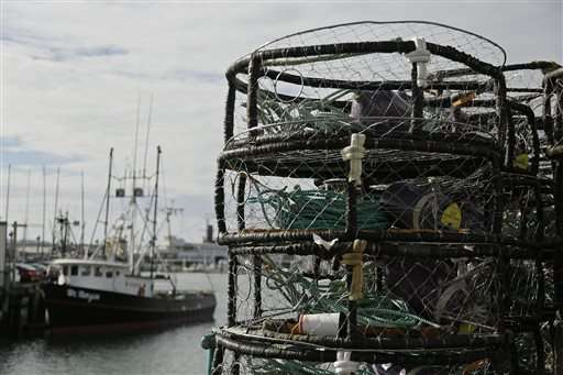 Boats sit idle as algae threatens Dungeness crab season