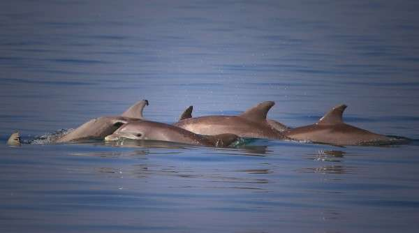 Groundbreaking study links levels of mercury in dolphins to exposure in humans