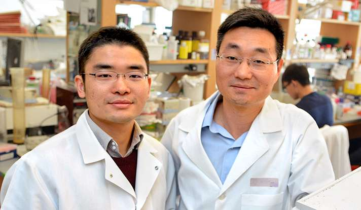 Scientists pinpoint pathway of resistance to viral infections in the gut