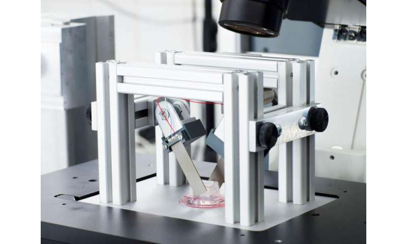 Scientists develop a device for shaping cells while viewing under a microscope
