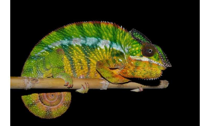 Biodiversity: 11 new species come to light in Madagascar